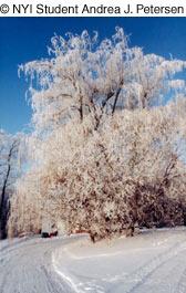 winter tree photography